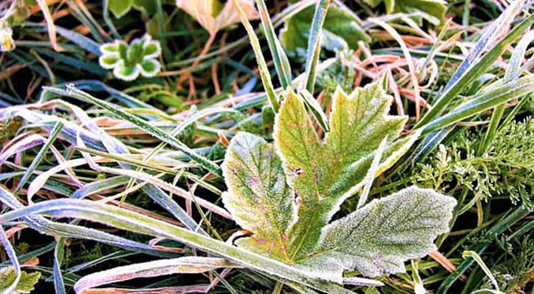 ВПермском крае предполагается холодный исухой май