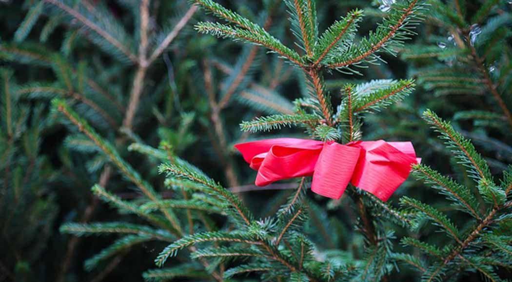 ВПерми милиция изъяла 115 новогодних елок