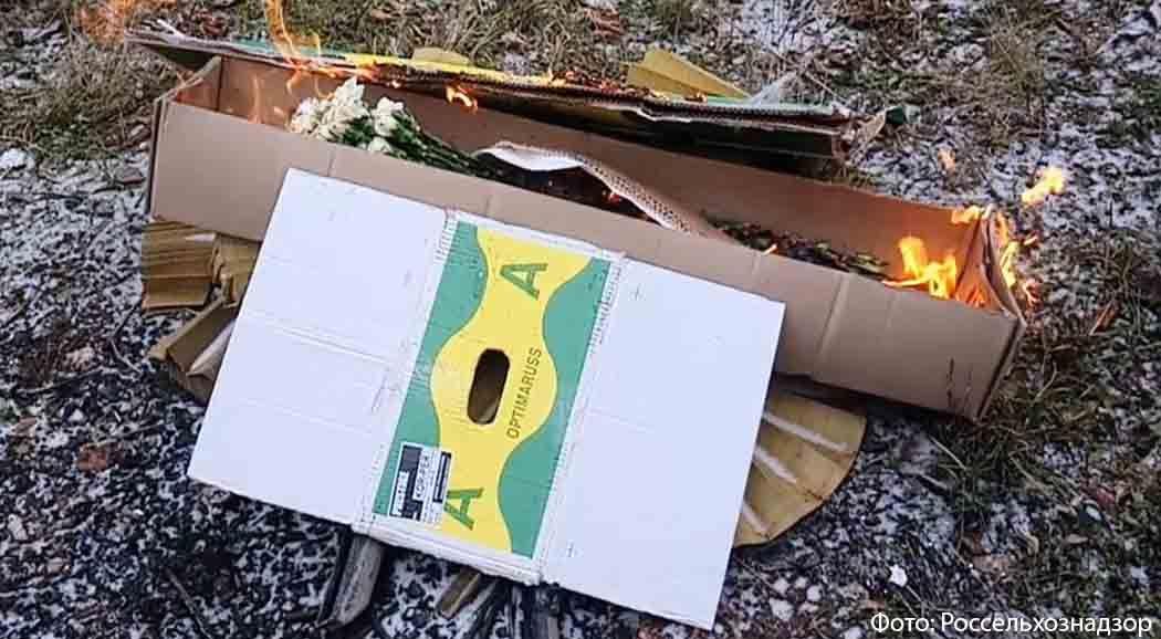 ВПерми уничтожили партию зараженных гвоздик изКолумбии