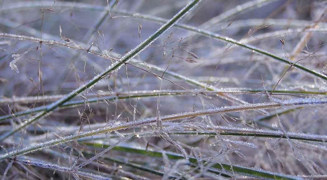 МЧС: вПерми вновь ожидаются порывы ветра до20 м/с